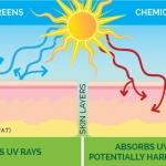 Cơ Chế bảo Vệ Làn Da Tự Nhiên Trước Tia UV – Phân Loại Chống Nắng